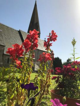 red flowers with the church spire behind