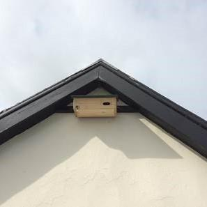 Swift box attached to the eaves of the church hall